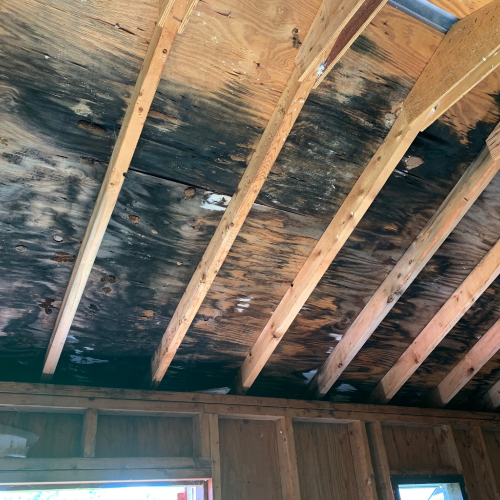 Mold Growth in the Attic