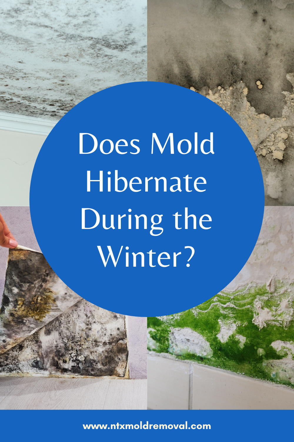 does mold hibernate during the winter