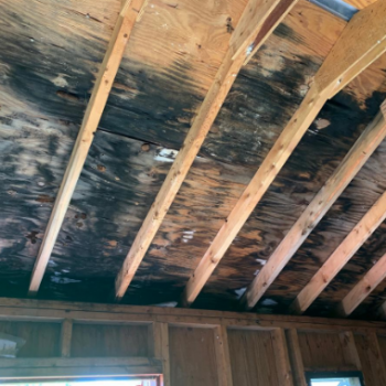 black mold roofing