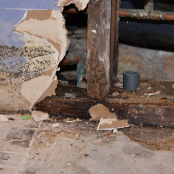water damage - mold removal